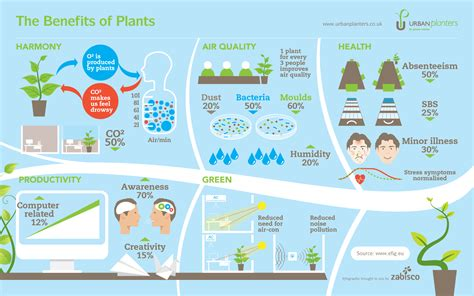 benefits of houseplants the benefits of plants infographic infographic list
