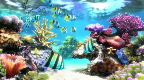 aquarium live themes pc sim aquarium screensaver live wallpaper youtube