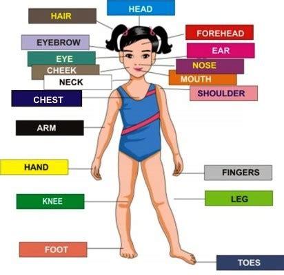 mengenal bagian bagian tubuh  bahasa inggris hanibi