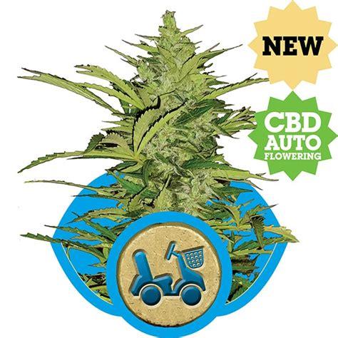 lade marijuana fast eddy automatic royal seeds seedfinder