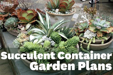 best 25 succulents in containers ideas on pinterest
