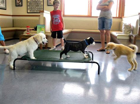 puppy kindergarten home page hilliard vet and animal hospital