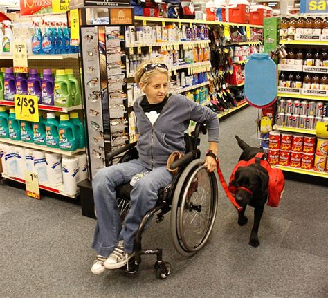 service dogs in laws neads world class service dogs rights access laws