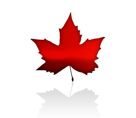 Canadian Finder Facts Maple Leaf Canadian Symbol Theleaf Co