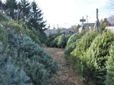 cut your own christmas trees hasbrouck heights nj patch