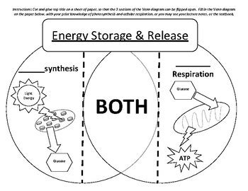 cellular respiration and photosynthesis venn diagram photosynthesis vs cellular respiration venn diagram study cards