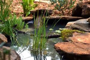 backyard frog pond call out for tasmanians to entice native frogs into