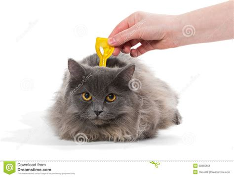Protect From Cat by Protect The Cat From Ticks And Fleas Stock Photo Image