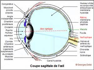 pin coupe sagittale de l oeil on