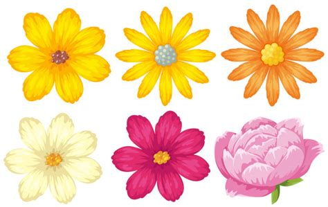 alle verschillende bloemen verschillende soorten bloemen in geel en roze vector