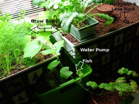 aquaponic indoor garden how to start your own aquaponics garden