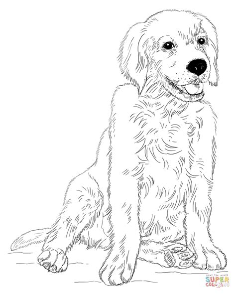golden retriever puppy coloring page free printable