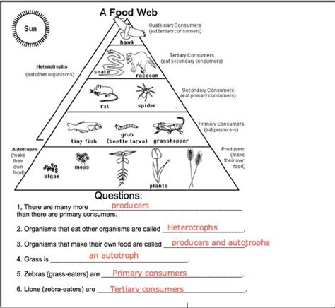 Food Chain Trophic Levels Worksheet Answers food chains and food webs worksheets for third grade
