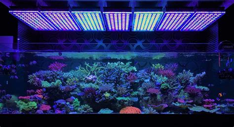 reef with lights amazing japanese reef tank atlantik v4 led lighting