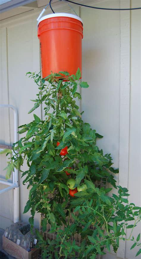 Inverted Tomato Planter diy tomato planter bored panda