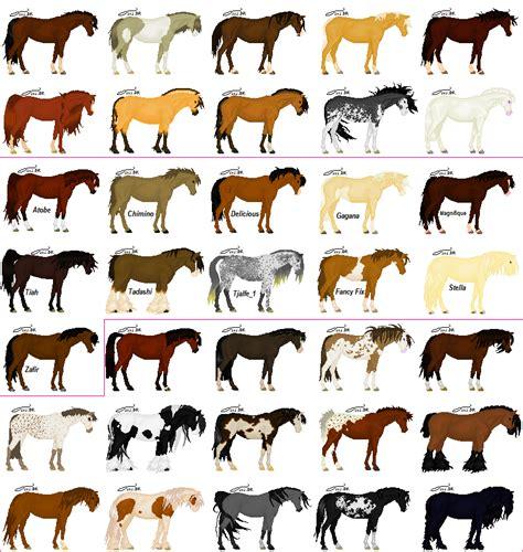 horse color pattern crossword horse color florabac com