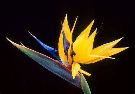 libro the yellow birds onvergeetlike skouspel van die kaapse blommeryk