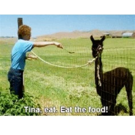 tina eat your food 79 best images about napoleon dynamite on pinterest