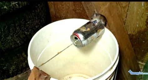 cara membuat jebakan tikus got jebakan tikus seorang penemu
