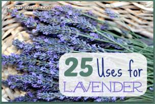 lavender oil uses and ways to use dry lavendar
