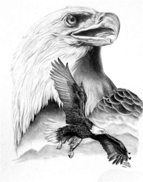 drawn house pencil drawing pencil and in color drawn house pencil eagle bird pencil sketch eagle pencil drawing drawingjanet