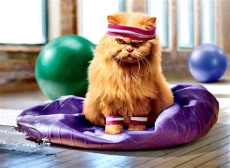 cat yoga wallpaper yoga cat f cats animals background wallpapers on