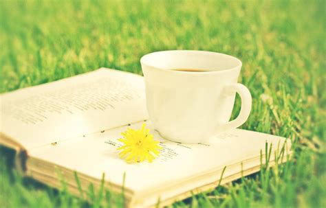 the book of tea books book and a cup of tea by jnac on deviantart
