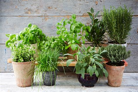 planting an herb garden the ultimate guide to growing herbs jamie oliver features