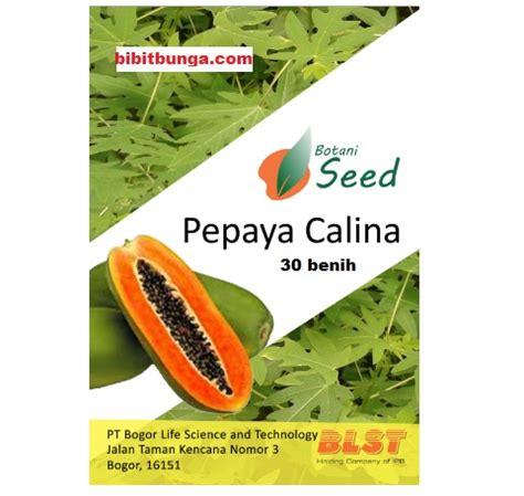 Benih Pepaya Calina Ipb benih pepaya calina ipb 9 jual tanaman hias