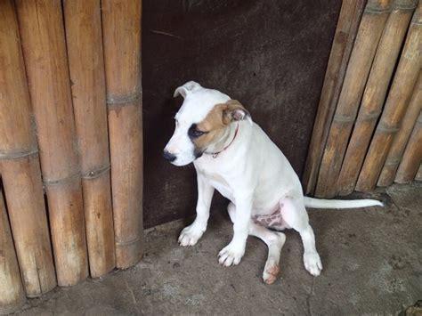 3 week puppy has fleas getting rid of fleas on a thriftyfun