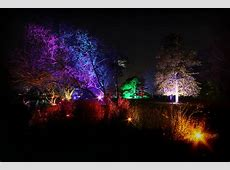 An evening stroll in Syon Park's enchanted woodlandOffice ... Enchanted Oasis