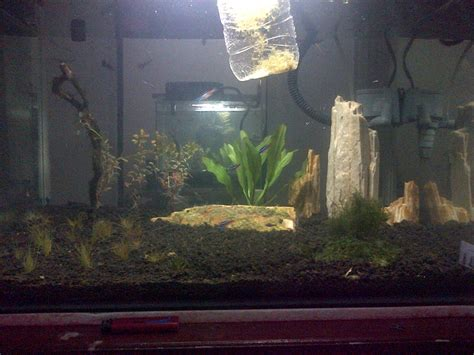 biaya membuat aquascape air tawar daftar harga hiasan aquarium denah rumah