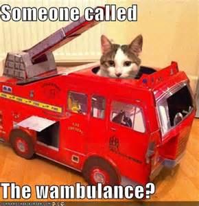 Wambulance Meme - somebody called the wambulance occupymelbourne net