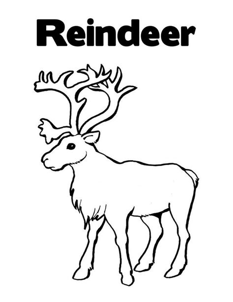 printable reindeer images free printable reindeer coloring pages for kids