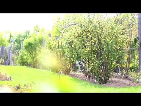archi per giardino arco per ricanti e da giardino