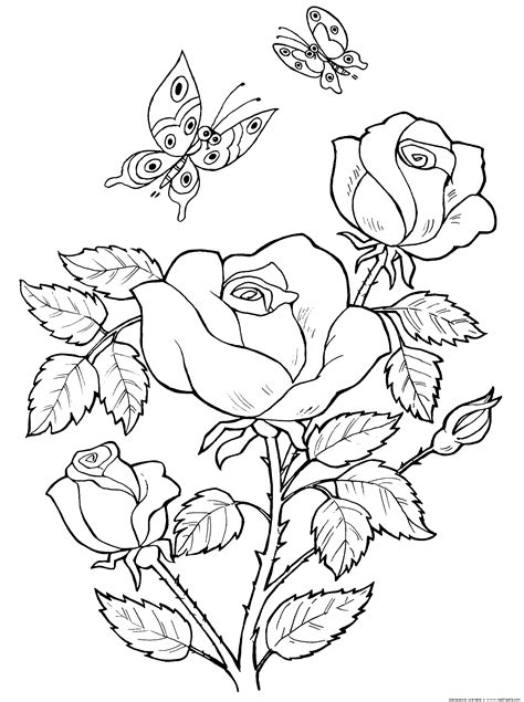 imagenes para dibujar de indigenas раскраска маргаритка и маки раскраски цветов картинки с