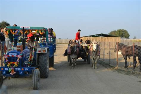 Ride On Kiddieland 51060 Farm Friends Activity Tractor T1310 1 tractor and bullock cart ride picture of pratapgarh farms and resorts jhajjar tripadvisor
