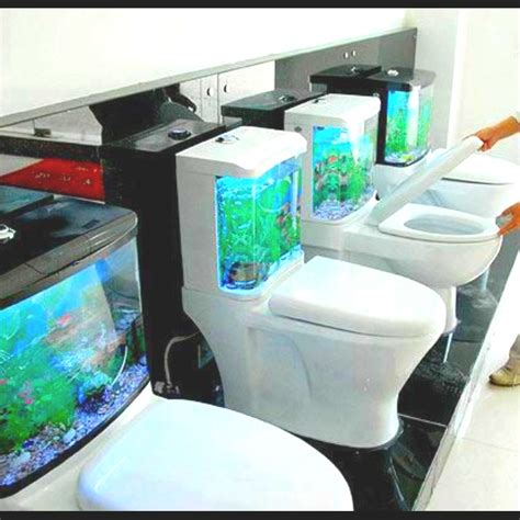 aquarium bathtub fish tank toilet fish tanks pinterest