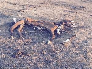 Muskogee County Property Records Oklahoma Rancher Arrested After Dozens Of Dead Animals Were Found On Property Ethiogrio