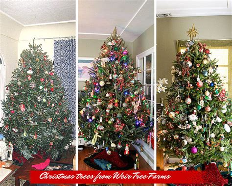 why you should buy your real christmas tree online and