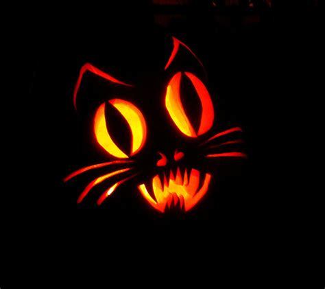 jack o lantern templates cat dsc02953 cat pumpkin flickr photo sharing