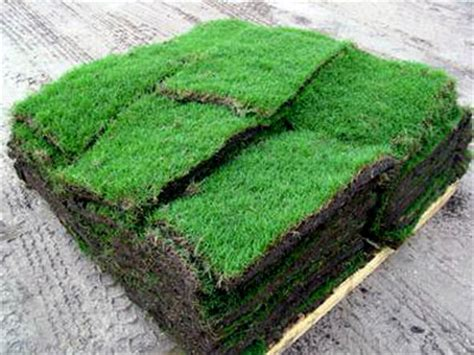 bermuda sod prices how much does bermuda grass sod cost