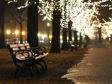 bench night bench central park dark evening light night image