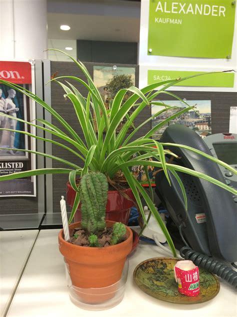 desk job   plants huffpost