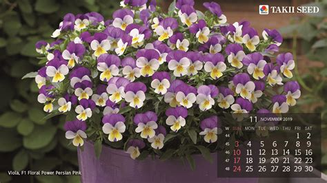 flower calendar takii seed international official website