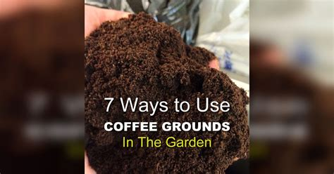 Coffee Grounds Gardening by 7 Coffee Ground Garden Hacks That Will Turn Your Thumb Green