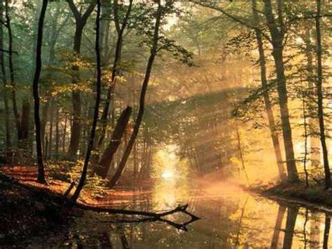 el bosque sonidos de p 225 jaros en el bosque youtube