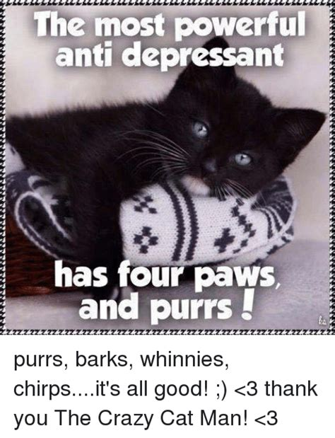 Crazy Cat Man Meme - the most powerful anti depressant has four paws e and