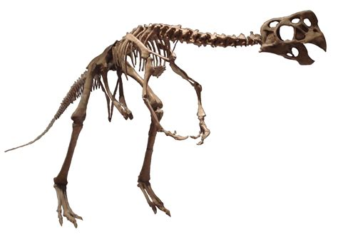 Raptor Background Check Oviraptor Size Www Pixshark Images Galleries With A Bite