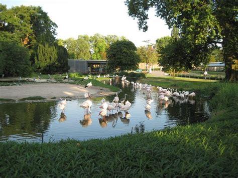 Wilhelma Zoo And Botanical Garden фламинго Picture Of Wilhelma Zoo And Botanical Garden Stuttgart Tripadvisor